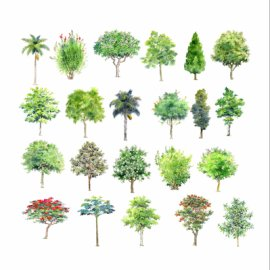 手绘园林用树
