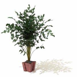 景观植物盆景
