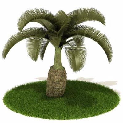铁树植物模型