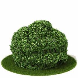 绿化植物模型