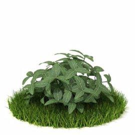3D植物模型
