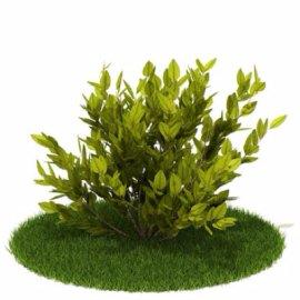 金森女贞植物模型