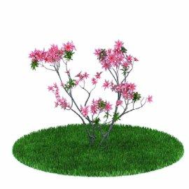 景观植物树模型