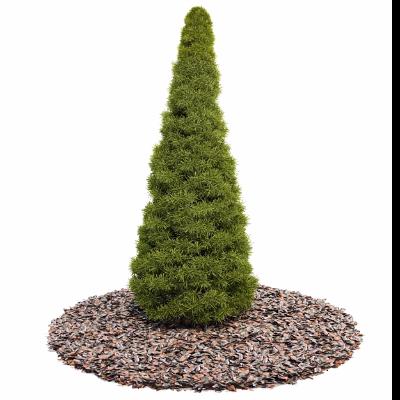 3d景观树模型