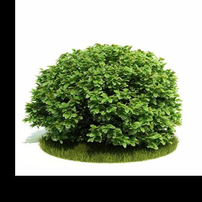3d景观植物模型