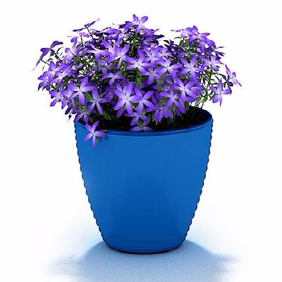 紫色花盆栽