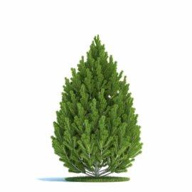 室外植物模型