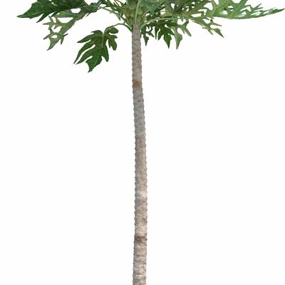 3d高大植物模型