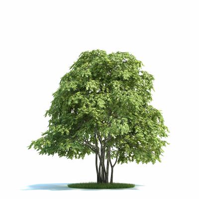 室外植物树模型