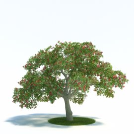 3d精美植物模型