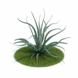3d芦荟植物模型