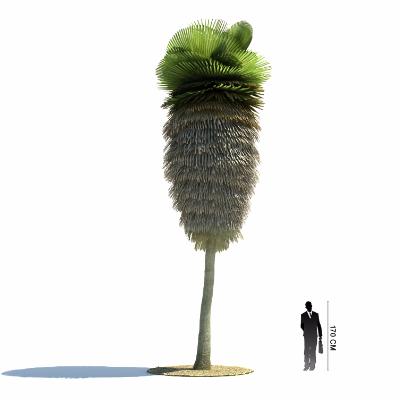亚热带植物