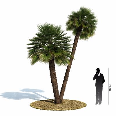 棕榈树模型