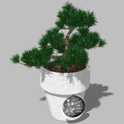景观盆栽模型