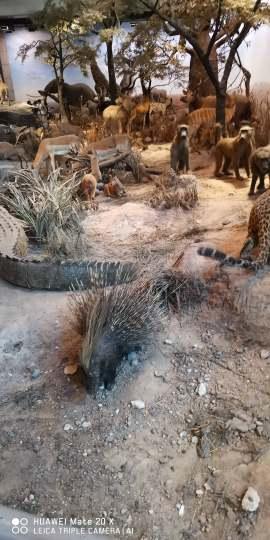 上海博物馆动物展示